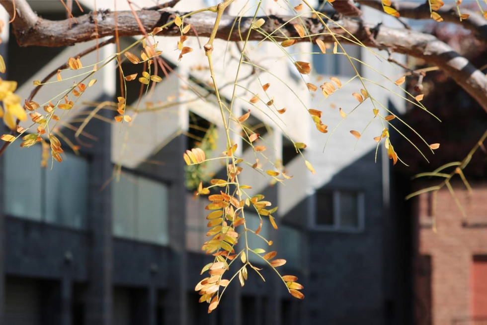 Autumn Leaves on Instagram (Urban Edition)