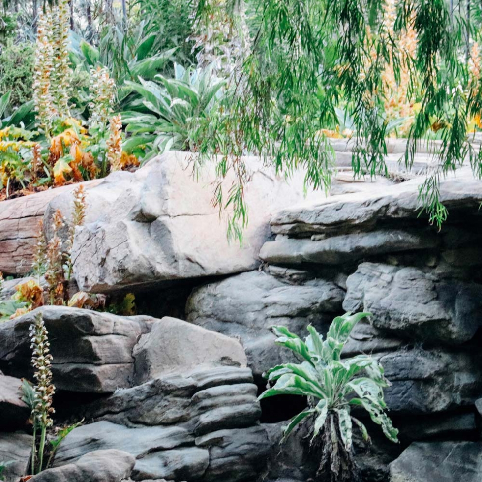 Adelaide Veale Gardens, South Australia // Moments by Charlie | Creative Lifestyle Blog | Art + Fashion + Lifestyle plus Photography | Made in Australia