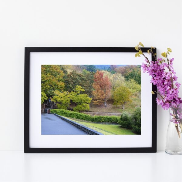Nature Photography Fine Giclee Print | Mount Lofty Botanic Gardens, South Australia | Size A4 | By Adelaide Artist Charlie Albright | Moments by Charlie Blog - Online Shop - Creative Freelance Services | Adelaide, South Australia
