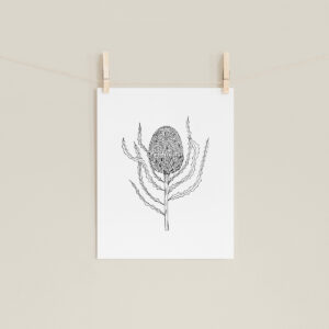 Moments by Charlie | Journey of Creative Pursuits by South Australian artist Charlie Albright. Banksia Burdettli Modern Flower Line Art Drawing, Illustration. Unframed Fine Art Giclee Print A4