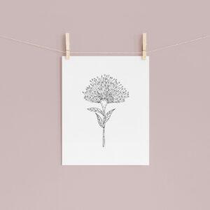 Moments by Charlie | Journey of Creative Pursuits by South Australian artist Charlie Albright. Bottlebrush Callistemon Flower - Modern Flower Line Art Drawing, Illustration. Unframed Fine Art Giclee Print A4
