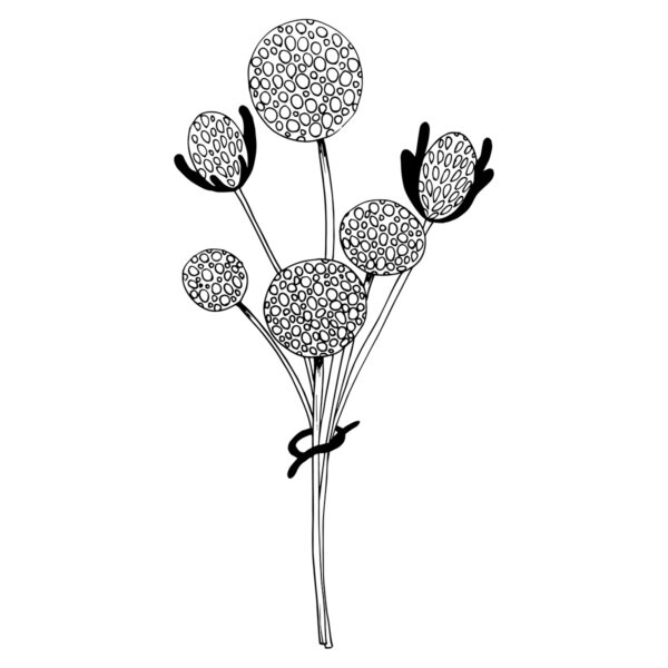 Moments by Charlie | Journey of Creative Pursuits by South Australian artist Charlie Albright. Craspedia Globosa Wildflower Modern Flower Line Art Drawing, Illustration.