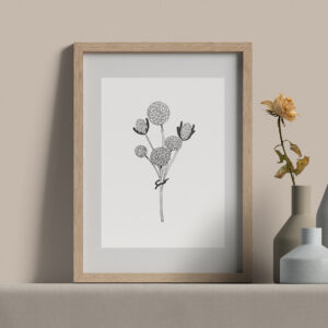"Moments by Charlie | Journey of Creative Pursuits by South Australian artist Charlie Albright. Craspedia Globosa Wildflower - Modern Flower Line Art Drawing, Illustration. Framed Fine Art Giclee Print A4 in Natural Oak Coloured 11"" x 14""x frame with matt opening 8"" x 10"""