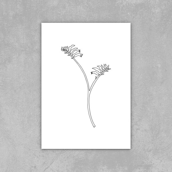 """Moments by Charlie   Journey of Creative Pursuits by South Australian artist Charlie Albright. Kangaroo Paw Modern Flower Line Art Drawing, Illustration. Unframed High-Quality Art Print sizes 4"""" x 6"""", 5"""" x 7"""", 8"""" x10"""", A4 and A3"""