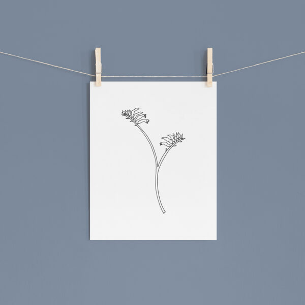 Moments by Charlie   Journey of Creative Pursuits by South Australian artist Charlie Albright. Kangaroo Paw Modern Flower Line Art Drawing, Illustration. Unframed Fine Art Giclee Print A4
